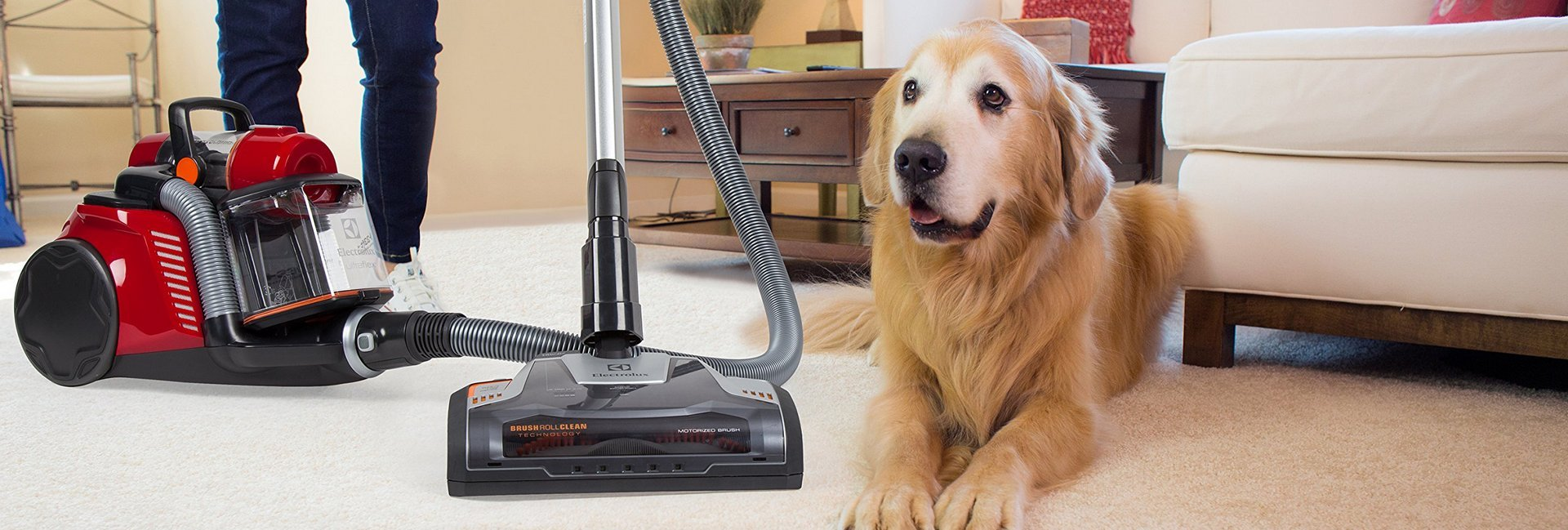 Best Shop Vac For Dog Hair