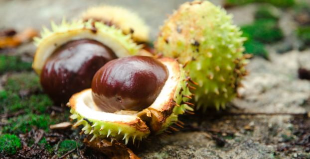 How long do vacuum packed chestnuts last